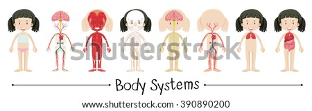 body systems stock images, royalty-free images & vectors, Human Body