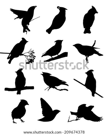 Bohemian waxwing silhouettes - stock vector