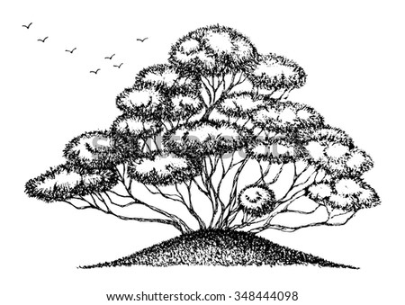 bonsai tree doodle style sketch drawing, hand drawn, vector design illustration - stock vector