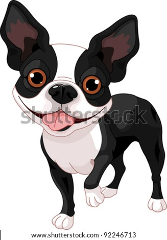 Boston Terrier, standing in front of white background - stock vector