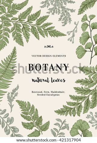 Botanical illustration with leaves. Boxwood, seeded eucalyptus, fern, maidenhair. Engraving style. Design elements. Vector.