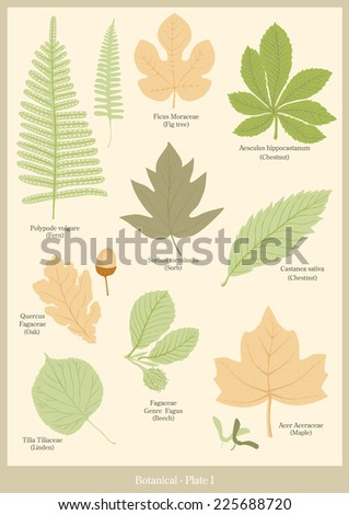 Botanical plate 1 - stock vector