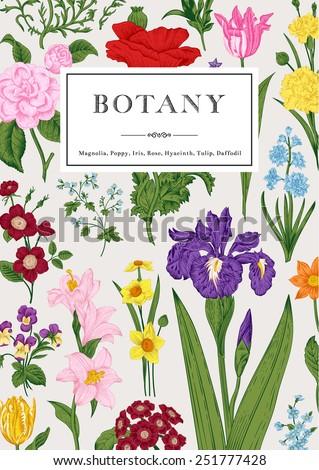 Botany. Vintage floral card. Vector illustration. Colorful flowers. - stock vector