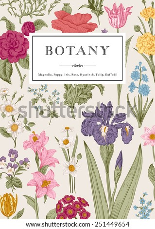 Botany. Vintage floral card. Vector illustration in engraving style. Colorful flowers. - stock vector