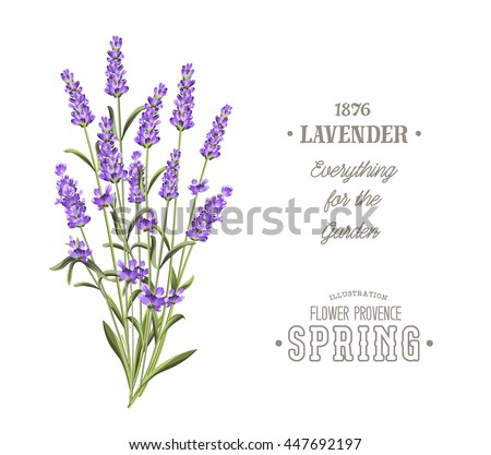 Bouquet of aromatic lavender flowers. Invitation card template with violet flowers of lavender. White wedding invitation.