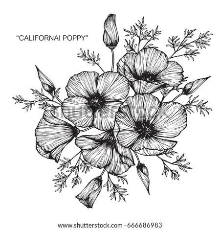 Bouquet california poppy flowers drawing sketch stock photo photo bouquet of california poppy flowers drawing and sketch with line art on white backgrounds mightylinksfo