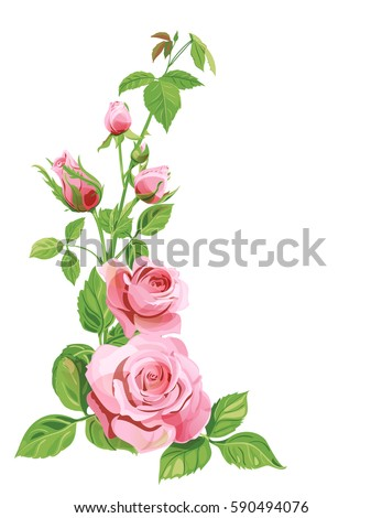 bouquet of roses pink red flowers and buds green leaves on white background