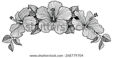Bouquet of three hawaiian hibiscus flowers. Black and white graphic art, hand-drawn. Cool for frame header.