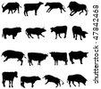 Bovine animals from around the world. - stock vector
