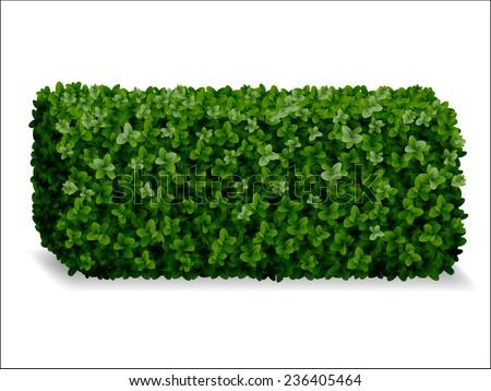 boxwood hedges ortho, decorative green fence - stock vector