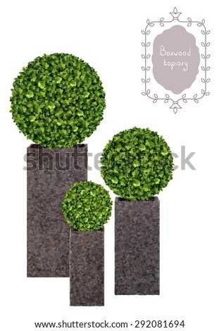 Boxwood topiary, garden plant, vector background. Decorative trimming boxwood. Tree in flowerpot. Shrub for landscape. - stock vector
