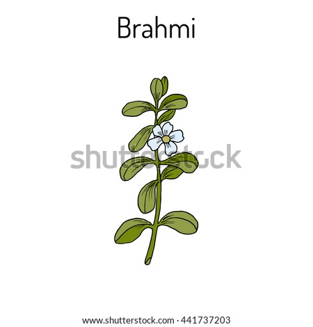 brahmi herb how to eat