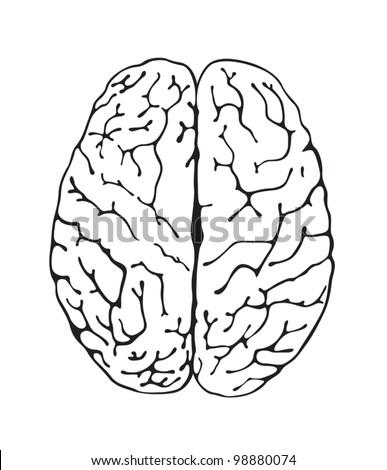 brain a top view - stock vector