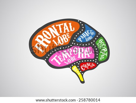 Brain divided in color parts. Vector brain cuts diagram vintage style. Business concept  - stock vector