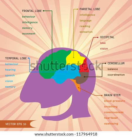 Brain function vector - stock vector