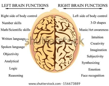 Brain Hemisphere Functions Vector Stock Photo Photo Vector