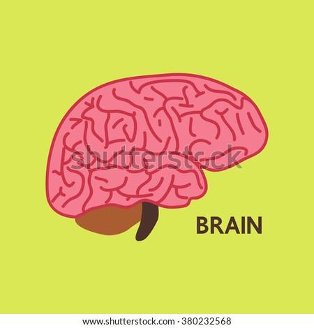 Brain illustration vector colorful - stock vector