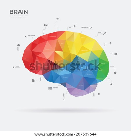 Brain Infographic concept. Vector illustration - stock vector