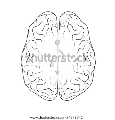 Brain isolated on white. EPS10 vector