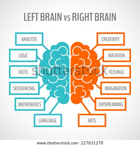 Brain left analytical and right creative hemispheres infographics set vector illustration - stock vector