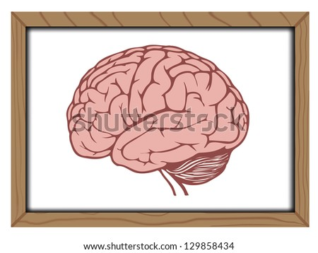 Brain on blackboard background ,Vector - stock vector