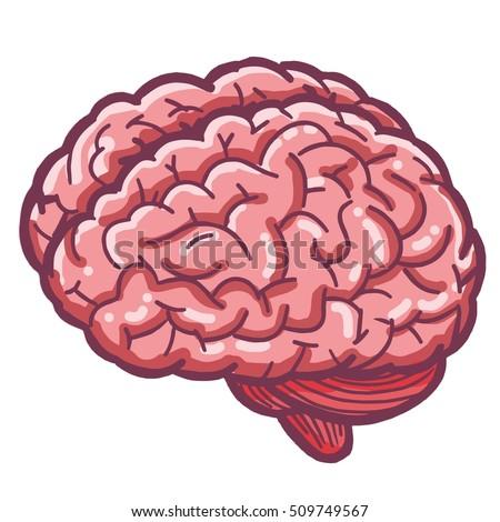 brain cartoon stock images royaltyfree images amp vectors