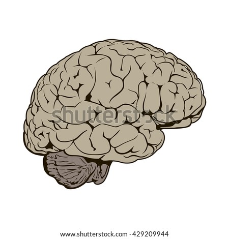 brain side view illustration object vector