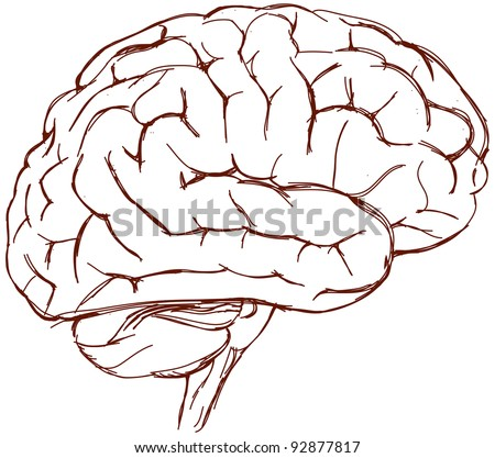 brain sketch - stock vector