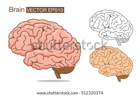 Brain vector outline and color on isolated background for logo design, web icon and other job about medical and health. - stock vector
