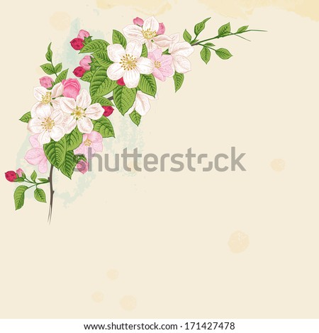 Branch blossoming apple. White and pink flowers with green leaves on a beige background.  - stock vector