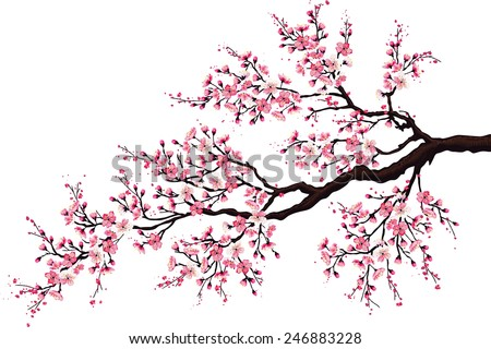 Branch of a blossoming cherry tree isolated on a white background - stock vector
