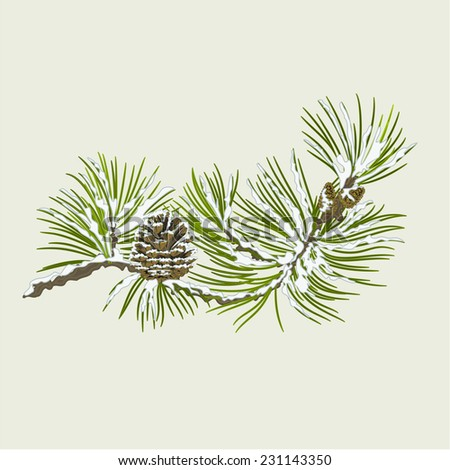 branch of christmas tree with snow pine branch whit pine cone vector illustration - Branch Christmas Tree