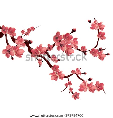 Branch of pink blossoming sakura. Japanese cherry tree. Vector Isolated Illustration on white background