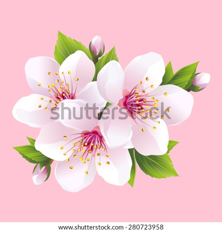 Branch of white blossoming sakura - japanese cherry tree. Beautiful pink cherry blossom, isolated on pink background. Stylish floral spring wallpaper. Greeting or invitation card. Vector illustration - stock vector