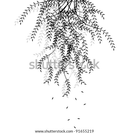 Branch of willow isolated on white background - stock vector