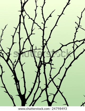 branch with dangerous thorns - stock vector
