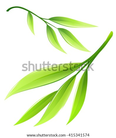 Branch with green bamboo leaves. Vector illustration isolated on white background. Green leaf ecology concept. - stock vector