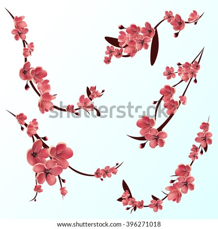 Branches of pink blossoming sakura . Japanese cherry tree. Vector Isolated icon Set