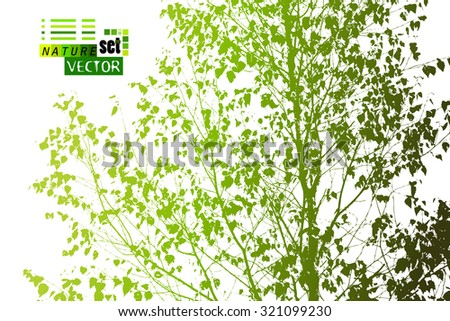 branches with leaves trace birch. Vector - stock vector