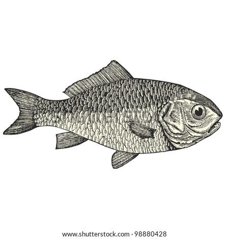 """Bream - vintage engraved illustration - """"Dictionnaire encyclop�©dique universel illustr�©"""" By Jules Trousset - 1891 Paris - stock vector"""