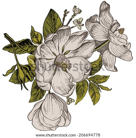 Brier, dog-rose, rose-hip. Classic pattern. Beautiful white flowers. Vintage background with blooming flowers. Drawing, engraving. Freehand. Wallpaper. Vector victorian style Illustration.
