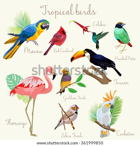 Bright color Exotic tropical birds set isolated.  - stock vector