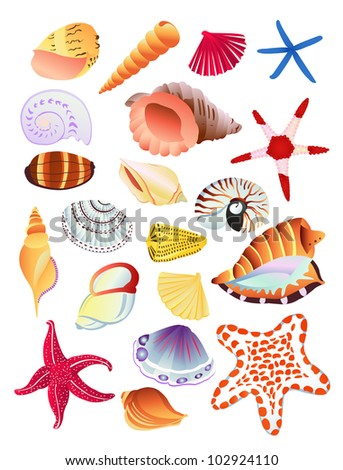 Bright, colorful collection of seashells and starfish. Vector illustration