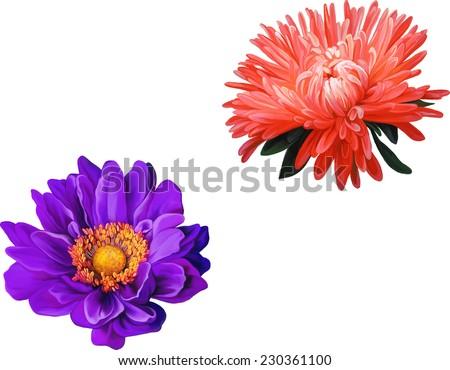Bright Purple Mona Lisa flower, Aster. Red flower, Spring flower. Isolated on white background. - stock vector