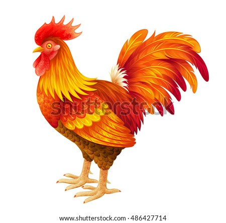 Bright red rooster vector illustration. EPS10