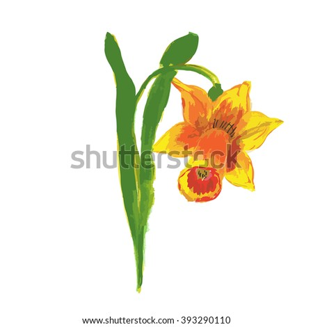 Bright yellow daffodils watercolor narcissus vector. Daffodil flower or narcissus. Watercolor blooming flowers daffodil blossom easter plant. Branch flowers spring plant and branch flower blossom. - stock vector
