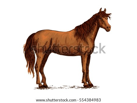 Brown arabian mustang stallion. Horse sketch for equestrian racing sport, horse riding races club, bets equine design. Wild horse standing on straight hooves with head turned aside and wavy mane