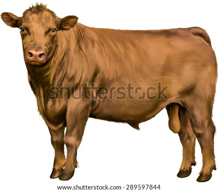 brown bull cow isolated on white background. Vector