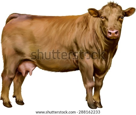 brown cow isolated on white background. Vector