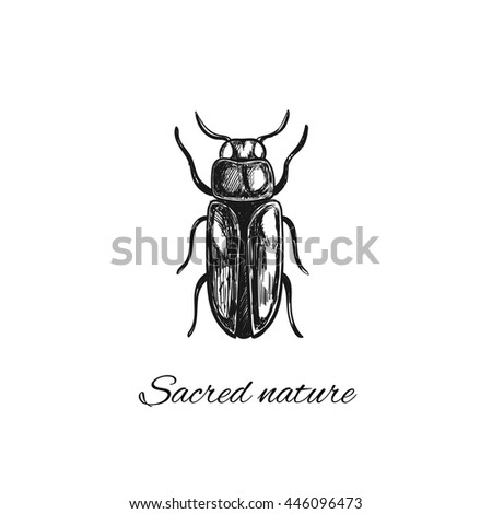 Bug. Sacred nature collection. Vector illustration in sketch style. Print, tatoo, creative card